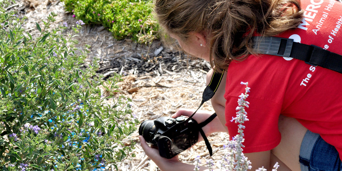 Student taking a photograph for an Agricultural and Environmental Sciences Communication course